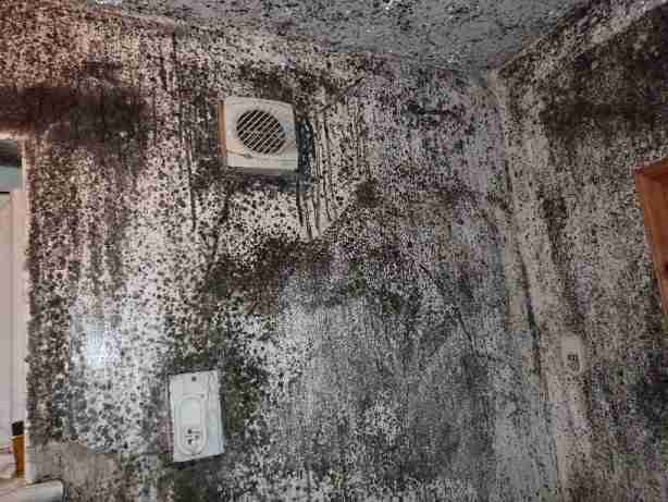 Image of a mouldy shower.